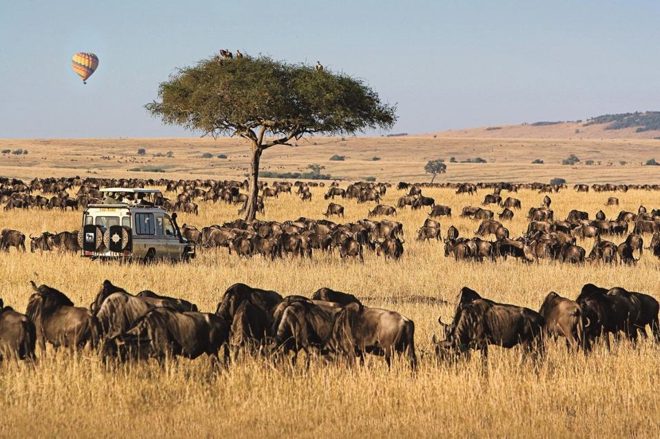 animals in wilderness