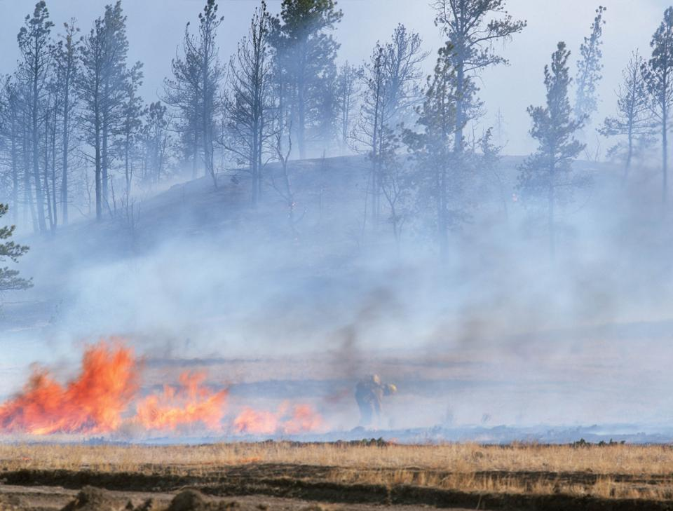 Wild Fire in Forest Big Timber Montana USA.