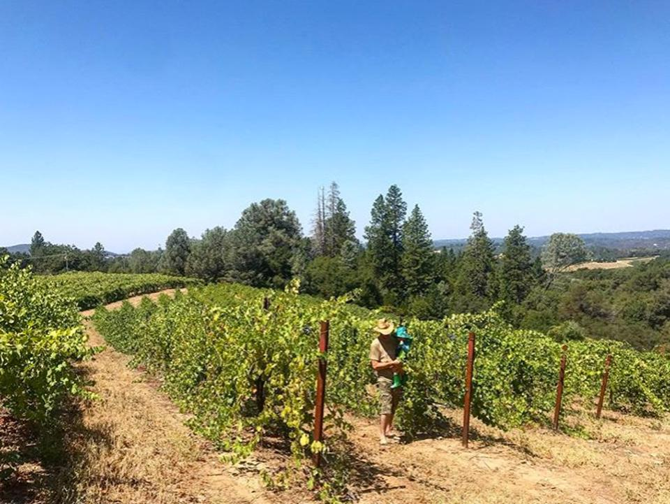 California vineyards, El Dorado County winemaker