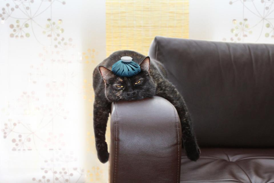 exhausted cat with an ice pack on its head