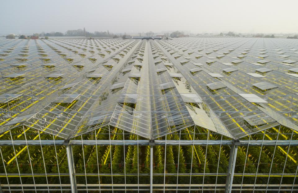 Greenhouse in the Westland area of the Netherlands.