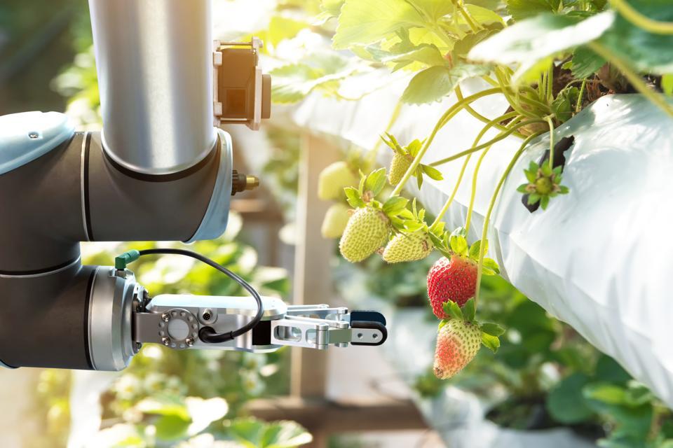 Rendition of robotic crop sprayer.