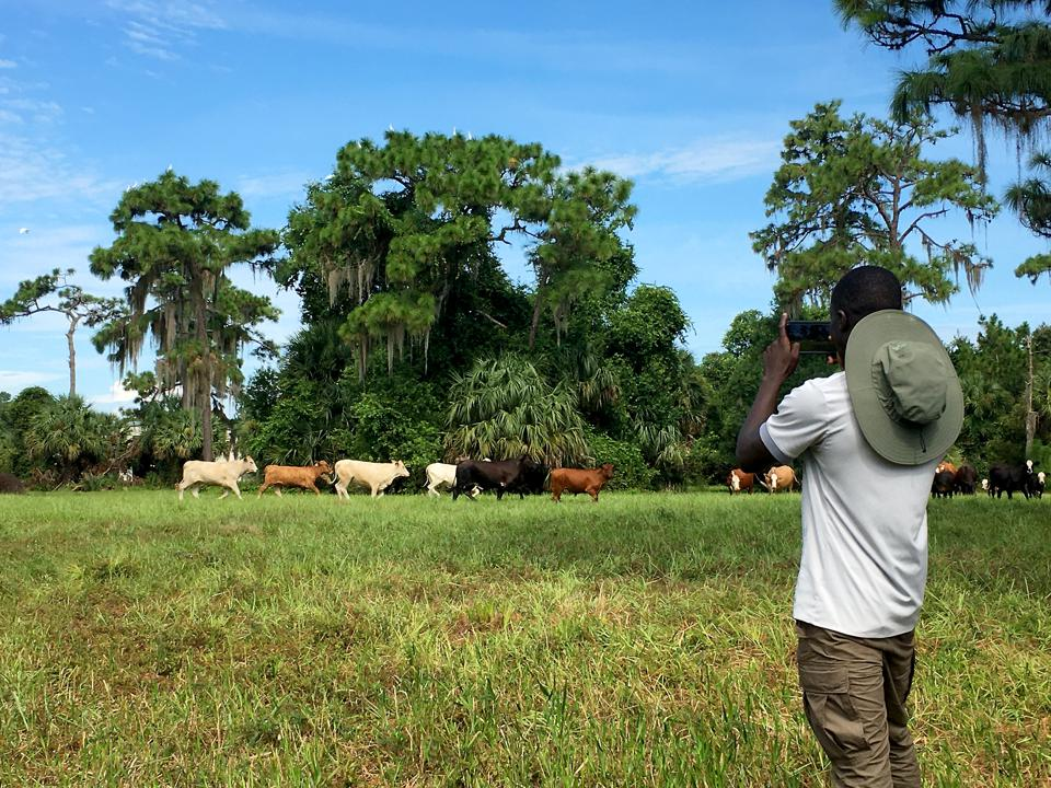 Wildlife Conservation Jobs - Fellow Papa Gueye photographs cows at the D Ranch Preserve