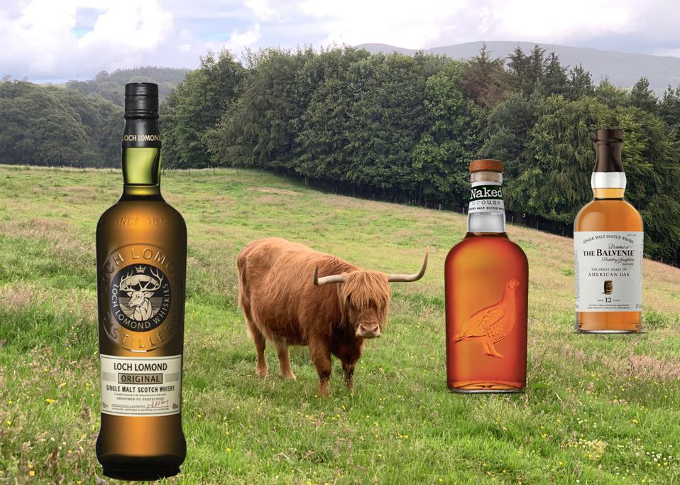 A longhaired cow grazes in an idyllic field beside bottles of Loch Lomond, Famous Grouse