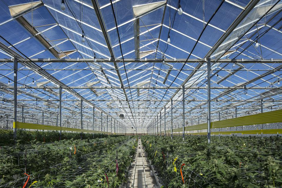 cannabis cultivation, The Pharm, Sunday Goods, cannabis greenhouse