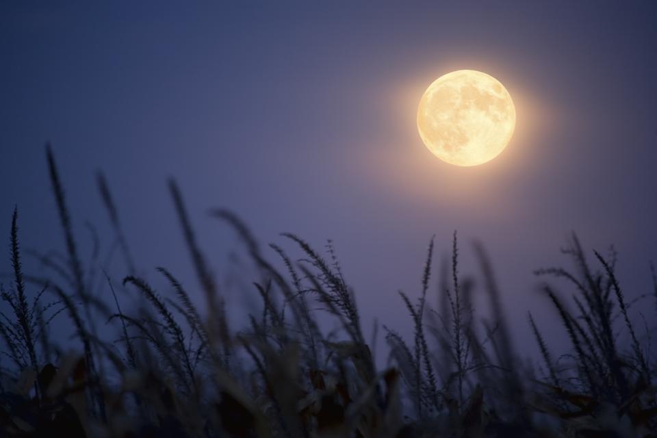 'Corn Moon' or 'Harvest Moon?'