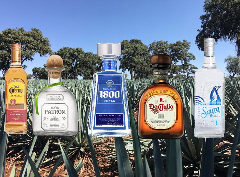A bottle of Jose Cuervo, Patron, 1800, Don Julio and Sauza tequila in the middle of agave