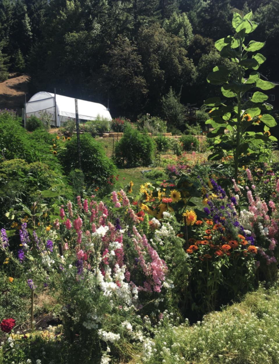 Local Eden: Emerald Spirit Botanicals garden