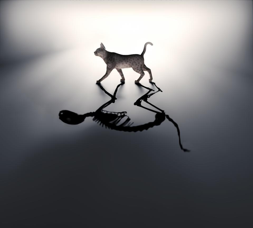Schrodingers cat, illustration