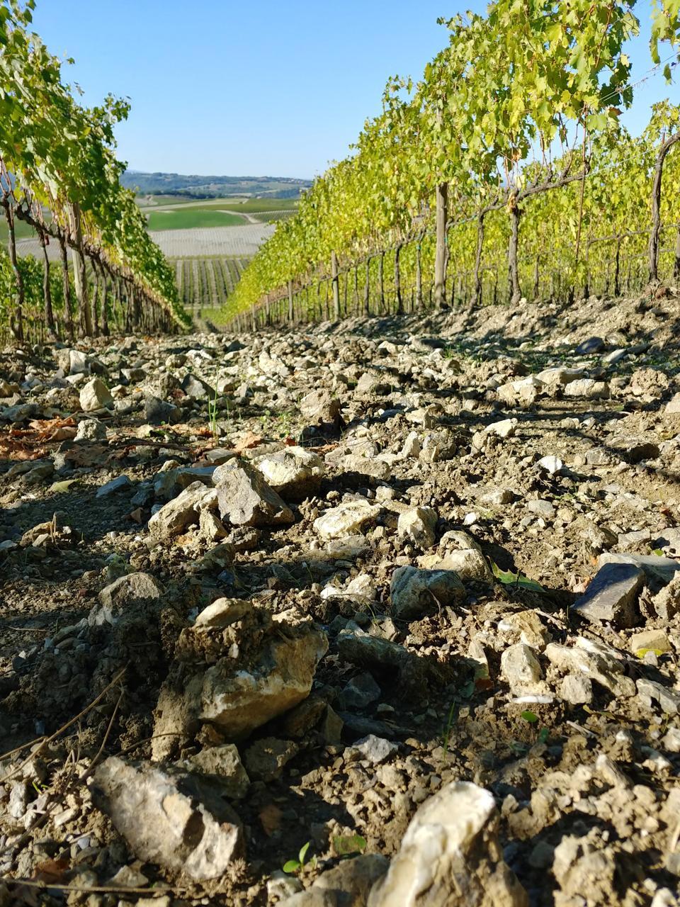 Montosoli Vineyards in Montalcino, Tuscany, Italy - Brunello di Montalcino