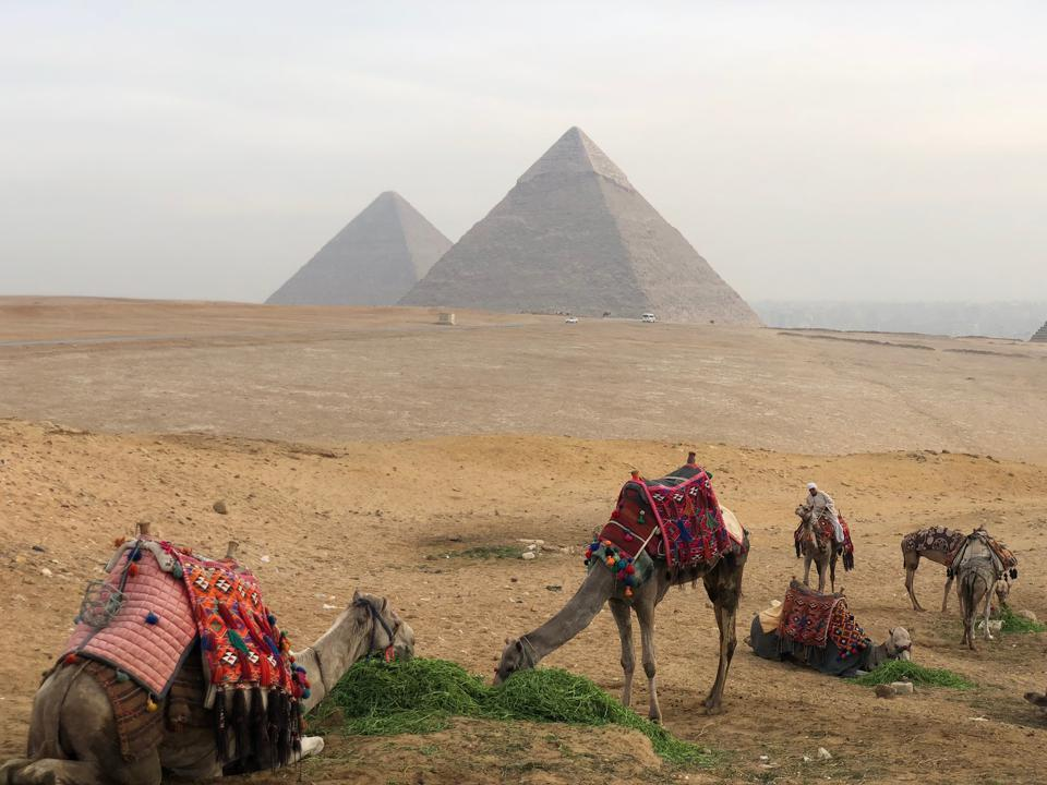 homeschooling distance learning, online, education, internetEgypt Giza Pyramid camels resting