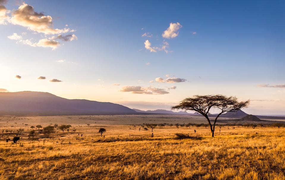 Sunset at savannah plains Kenya