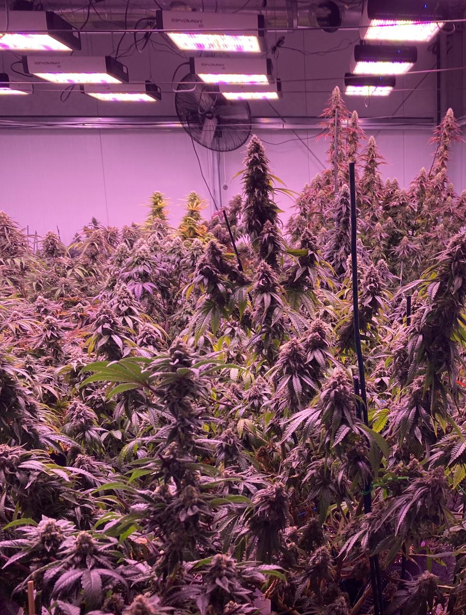 DARNELL VITATOE-GP MEDICAL RESEARCH Grow room