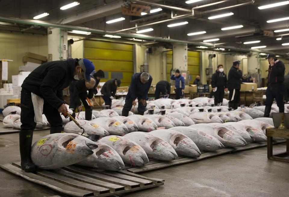 Tsukiji Fish Market Holds First Auction For 2017