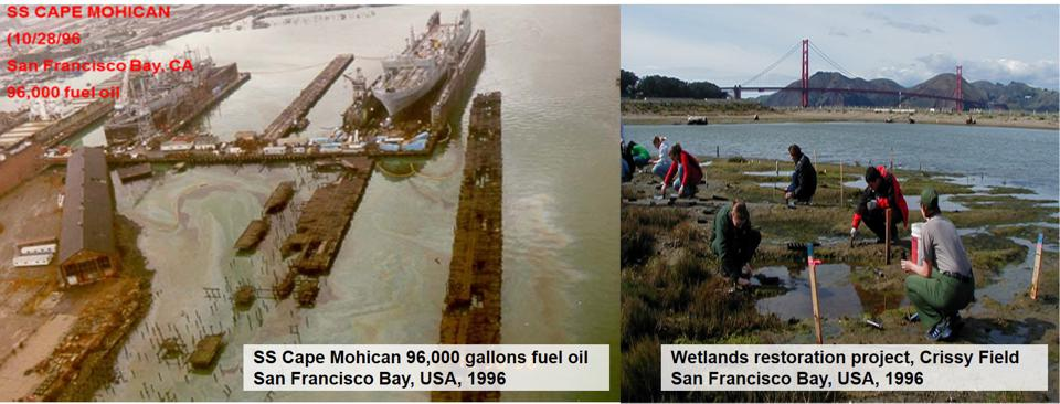 1996: the impact of 96,000 gallons of ship fuel oil in San Francisco Bay had widespread impacts on a range of habitats.  This was one third the size of the Mauritius oil spill.