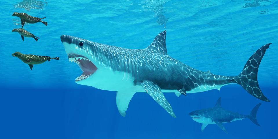 Researchers Have Determined How Big Megalodons Could Get