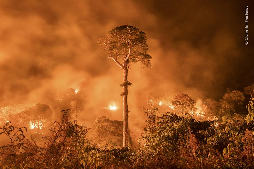 The Amazon Burning and a single tree standing.