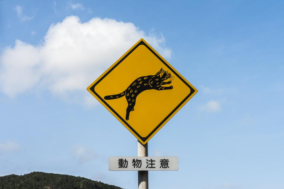 Iriomote cat (endangered species) road sign