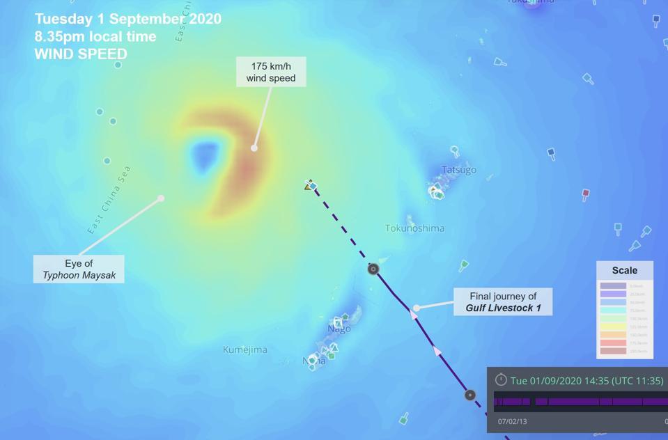 1 Sep 2020: satellite analysis by Windward show the Gulf Livestock 1 heading straight into the eye of Typhoon Maysak