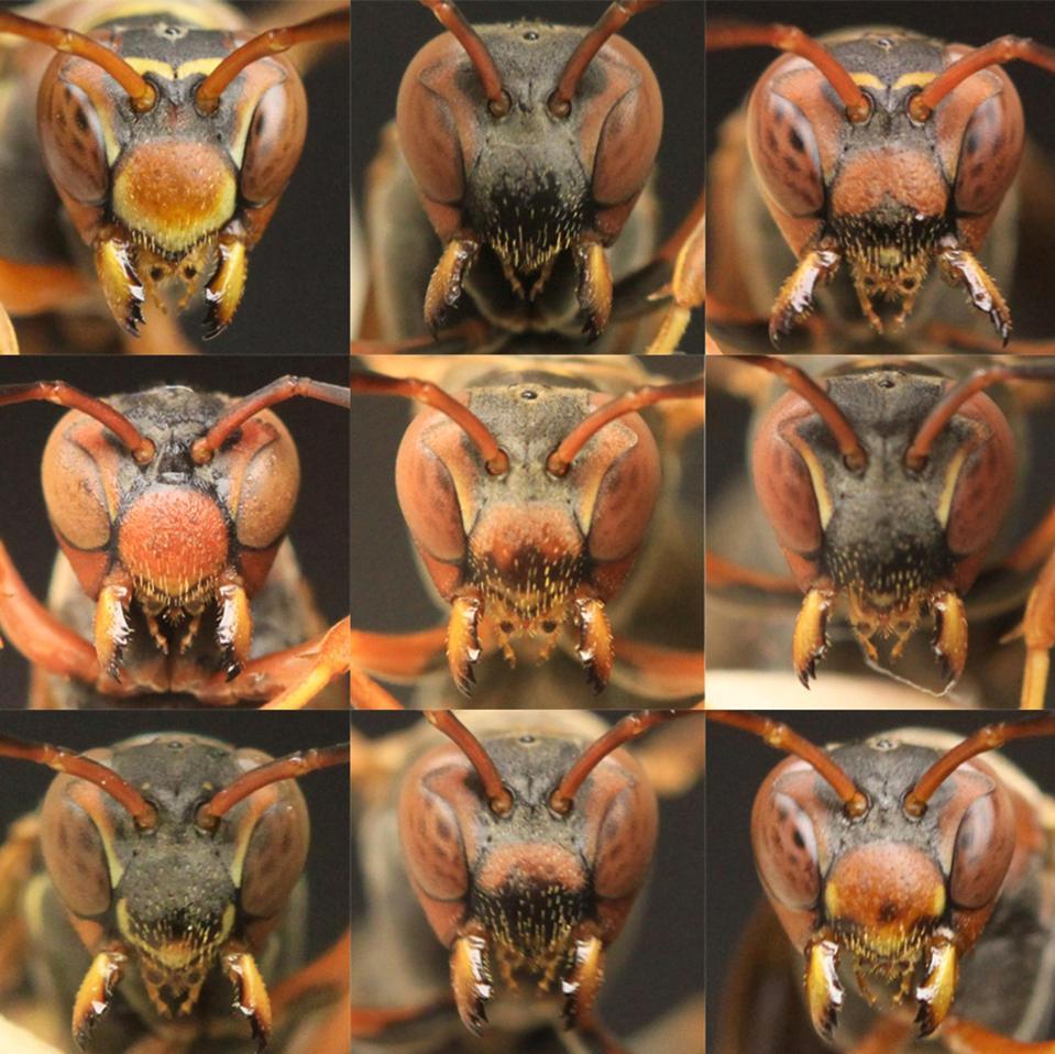 Nine wasp faces.