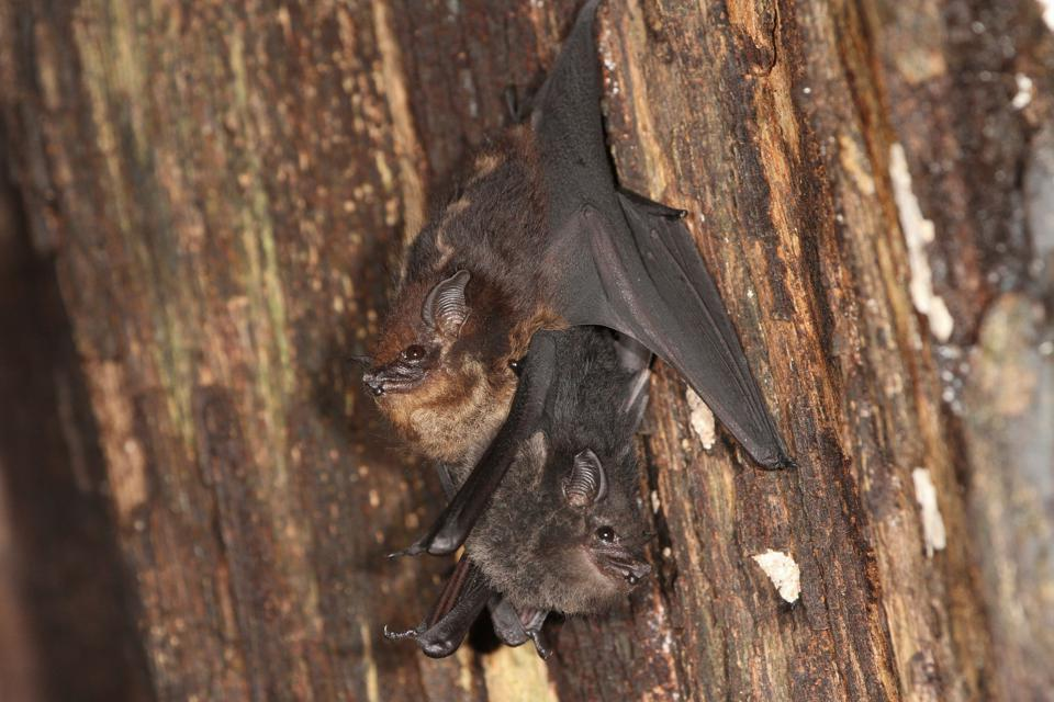 baby and mother bat