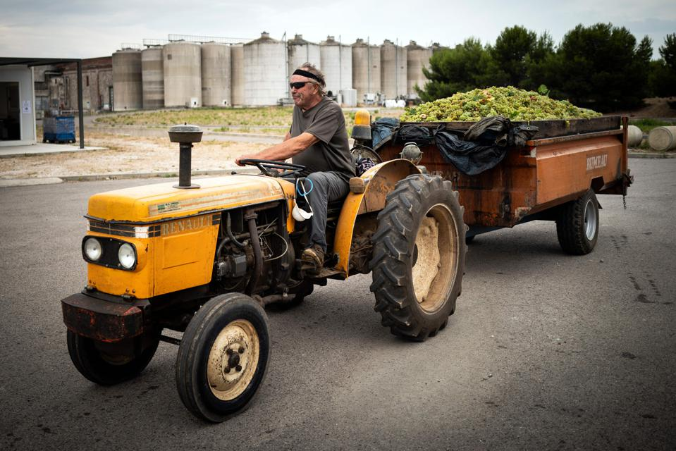 Winegrower Jean-Marie Dureu drives his tractor to a wine-growing cooperative in Rivesaltes, southern France.
