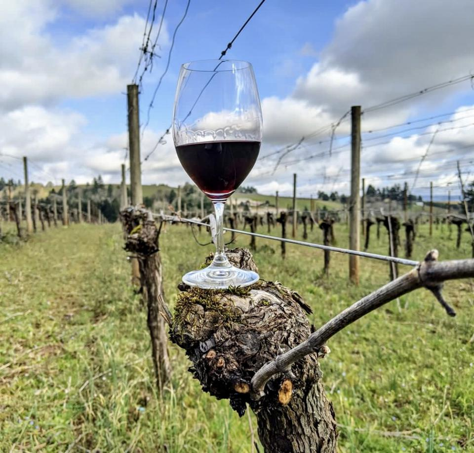Sokol Blosser in Oregon's Willamette Valley released the state's first box wine.