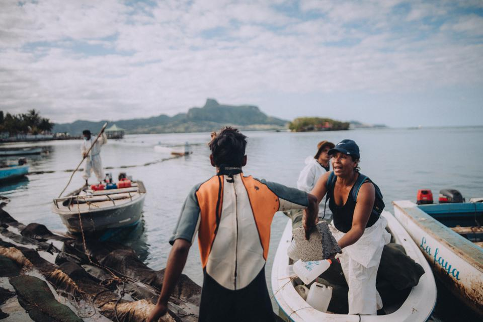 Women were on the front lines of defending Mauritius from the major oil spill
