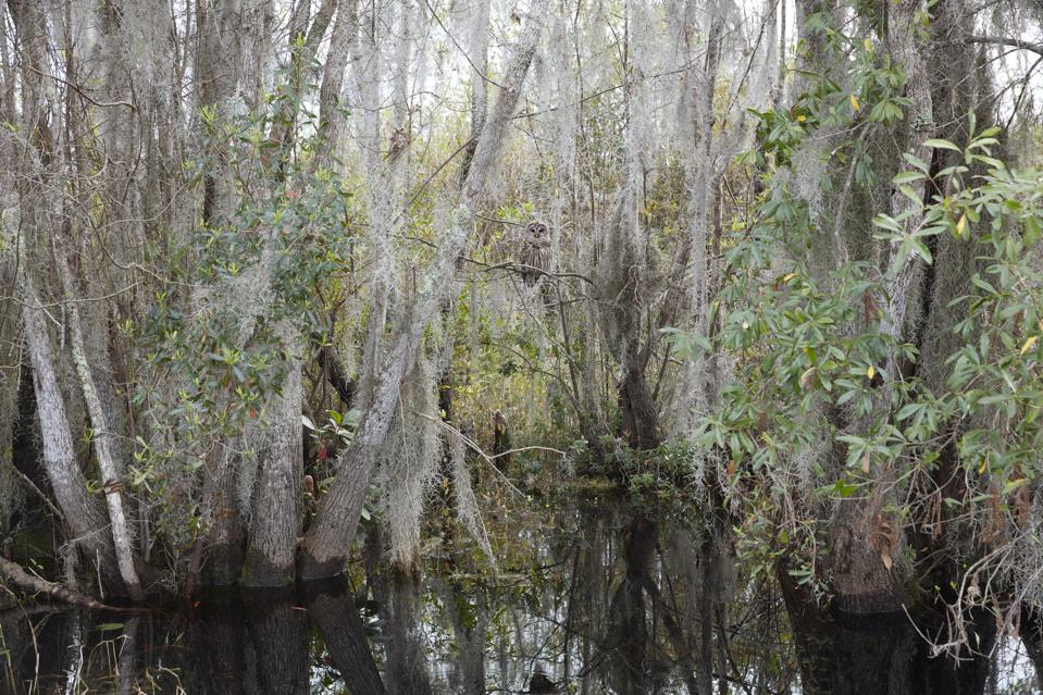 Importance of wildlife conservation - CATHERINE OPIE, 'Untitled #1 (Swamps),' 2019.  Pigment print 40 x 60 inches 101.6 x 152.4 cm.
