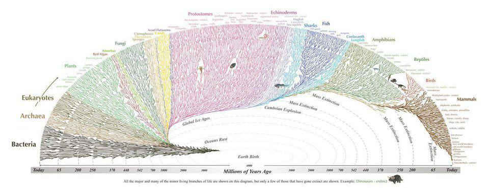 This tree of life illustrates the evolution and development of organisms on Earth.