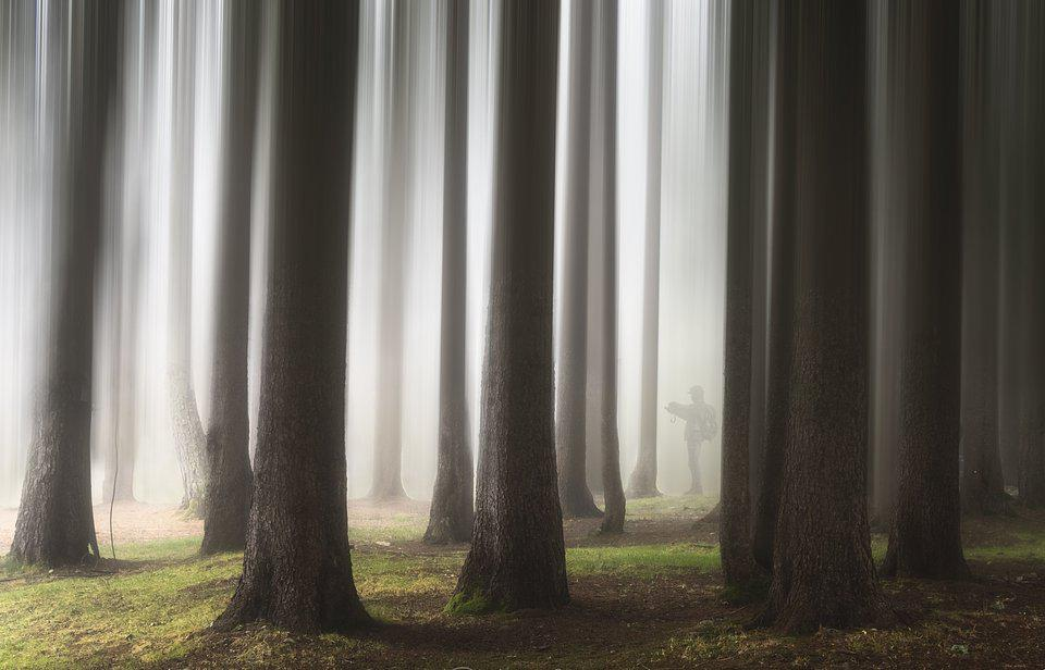 A surreal photo of a forest in Lago Nambino, Italy