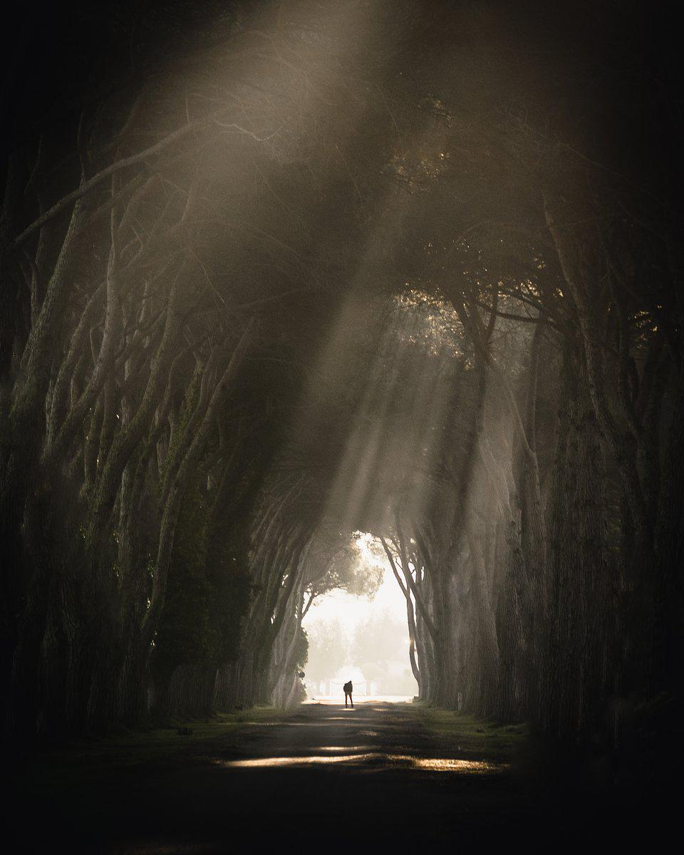 Light  crossing through dense trees in Tuscany, Italy.