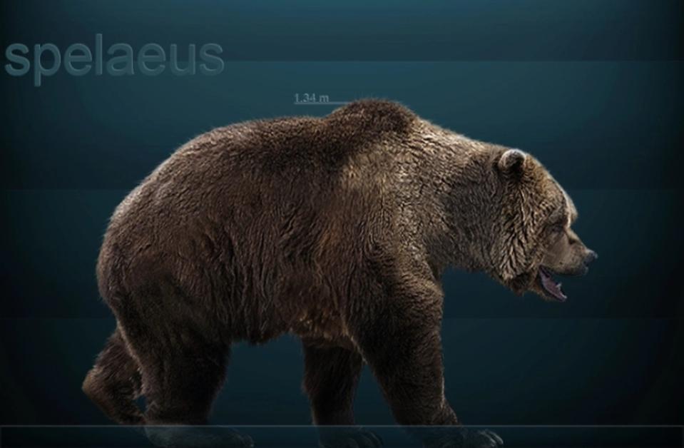 Reconstruction of a European cave bear (Ursus spelaeus).