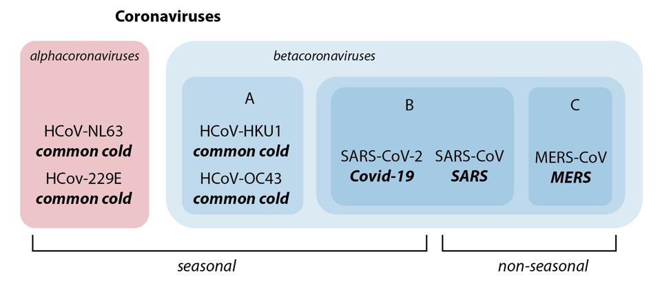 human coronaviruses