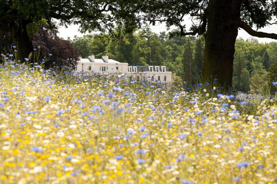 meadow flowers and white mansion