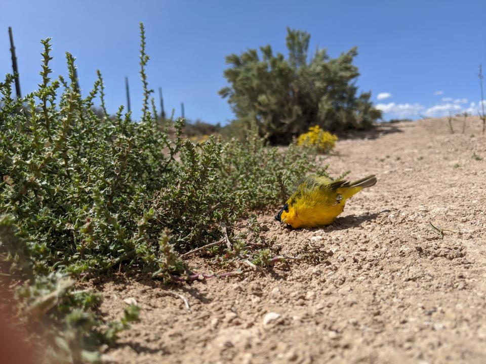 A migratory bird found dead near Carson, New Mexico.