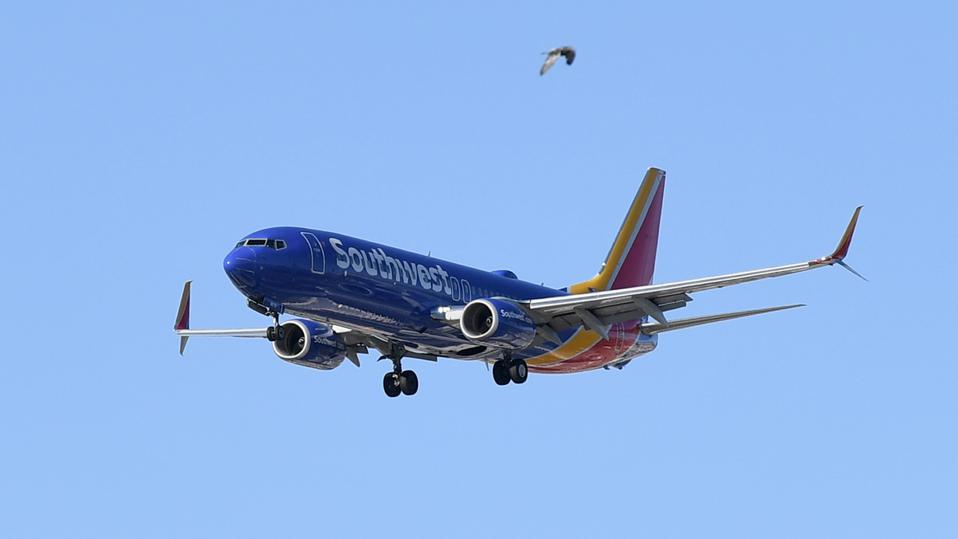 A bird flies by in the foreground as a Southwest Airlines jet comes in for a landing at McCarran International Airport on May 25, 2020 in Las Vegas, Nevada.