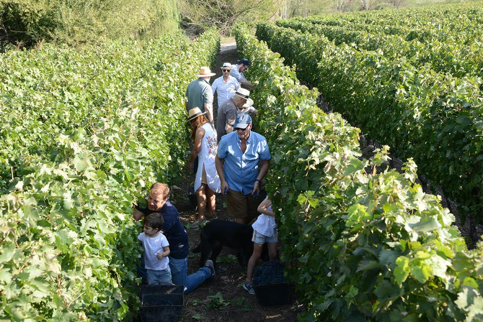 People are standing in the middle of a vineyard.