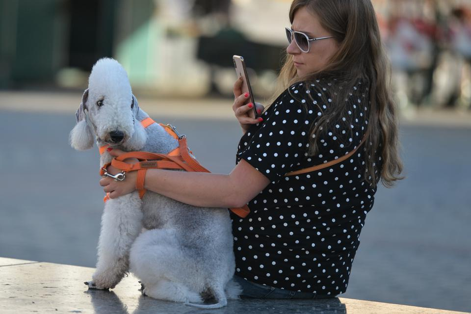 Dogs are the new ″must have″ travel companion