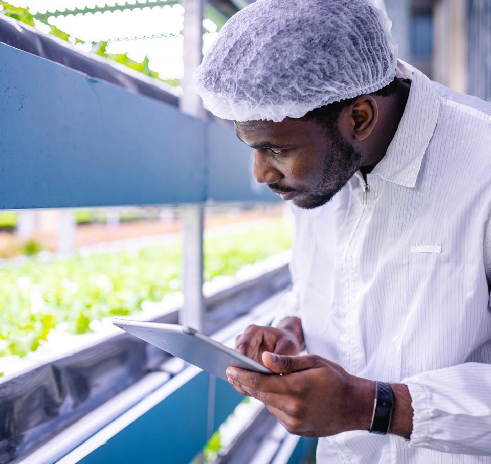 Inspector monitoring crop production