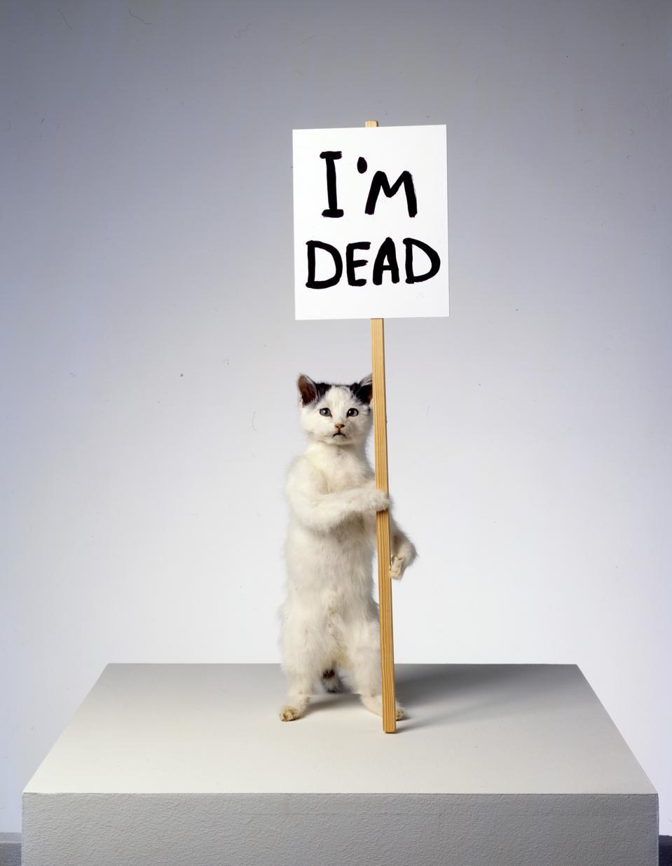 I'm Dead, taxidermy cat, by David Shrigley