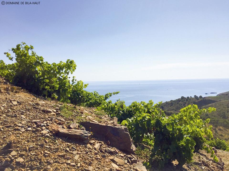 Domaine de Bila-Haut Old Vines