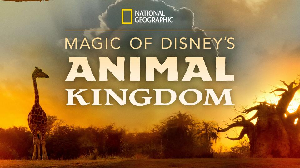 Logo from National Geographic's Magic of Disney's Animal Kingdom featuring a giraffe.