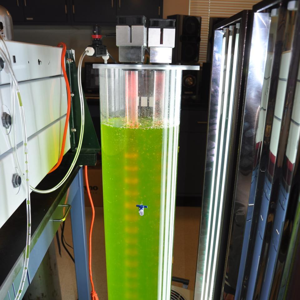 bioreactor algae biofuels