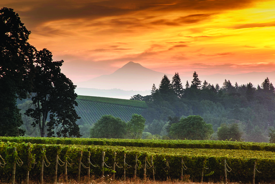 Sunrise over the Stoller Family Estate Vineyard with Mt. Hood in the background