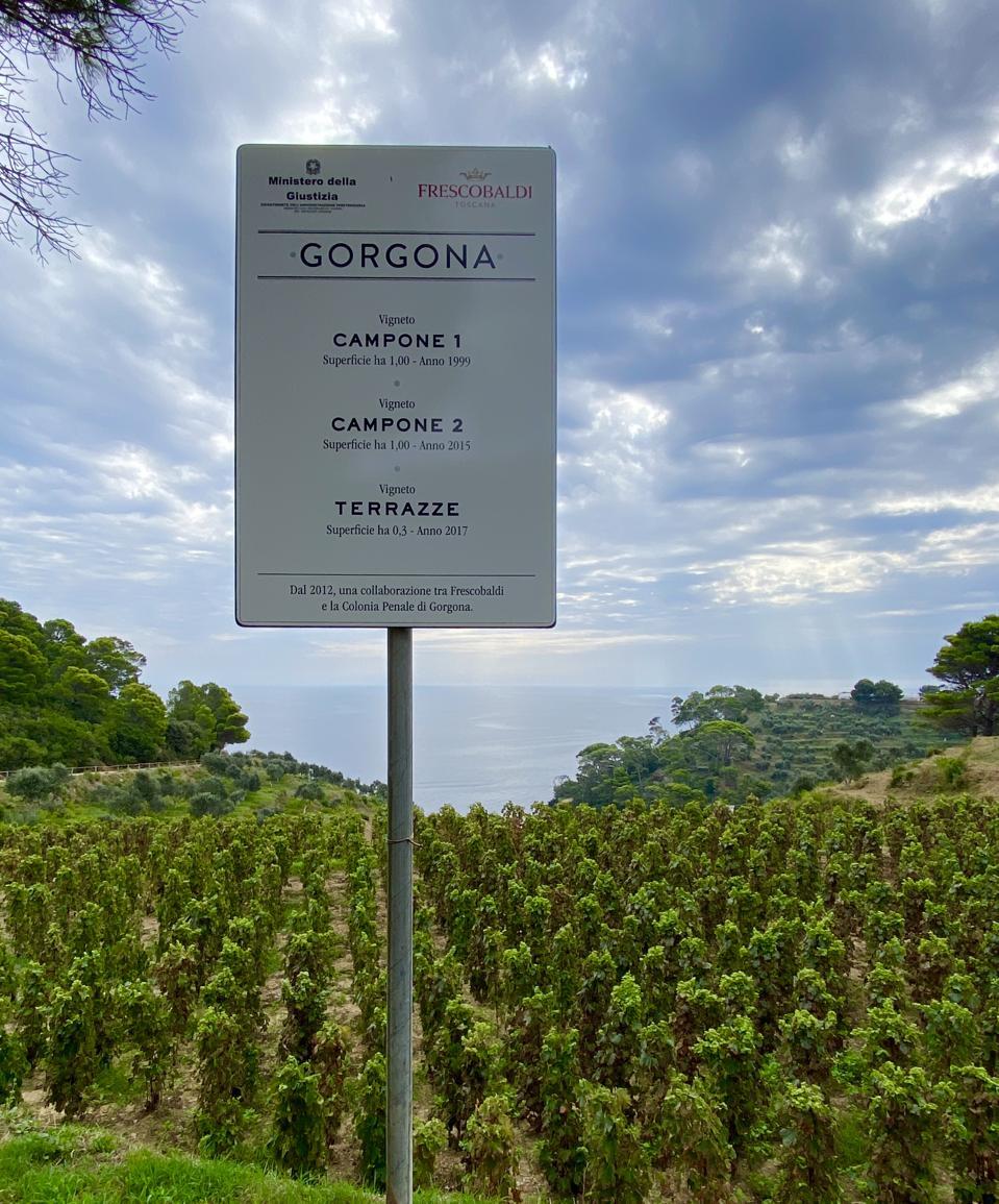 Vineyard names on Gorgona Island