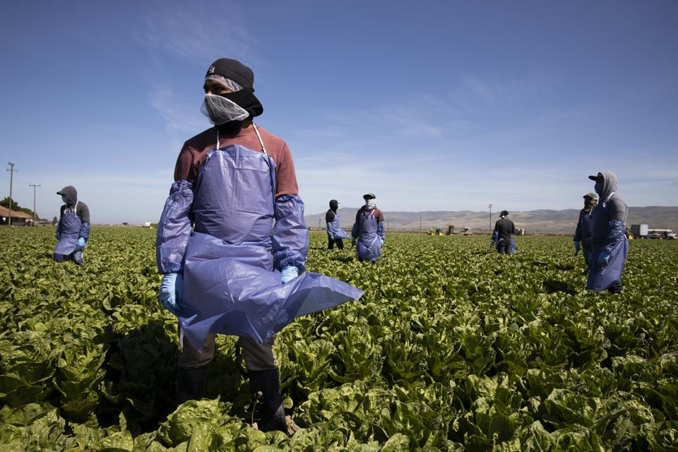 Migrant Agricultural Workers Critical To U.S. Food Security Amid COVID-19 Outbreak