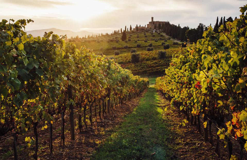 Sunset over vineyards in Tuscany