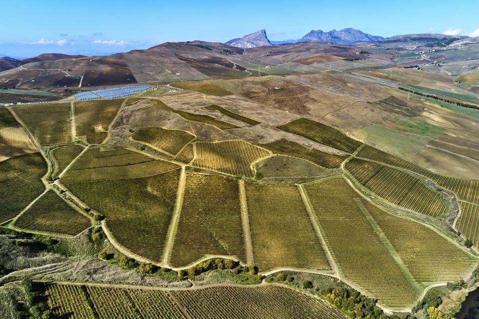 Vineyards in Sicily, Italy