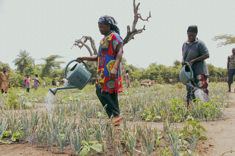 Woman watering vegetables in a production zone with solar panels and water pools for irrigation.